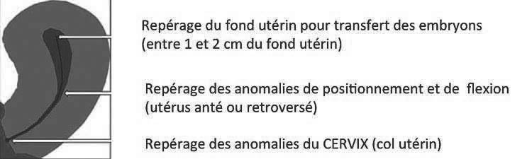 taille normale utérus